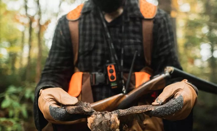 A bird hunter woodcock hunting with an L.L. Bean strap vest.