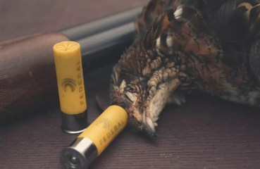 A Remington 870 with a ruffed grouse and shotgun shells.