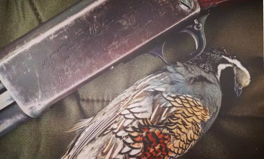 A California quail after a long hunt.