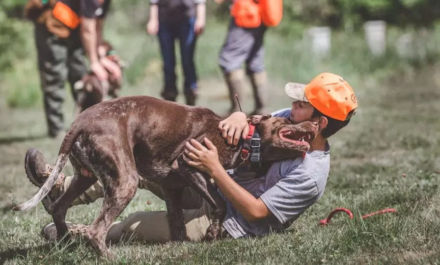 A boy plays with a bird dog during a NAVHDA event.