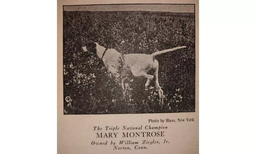Triple National Champion Poniter Mary Montrose