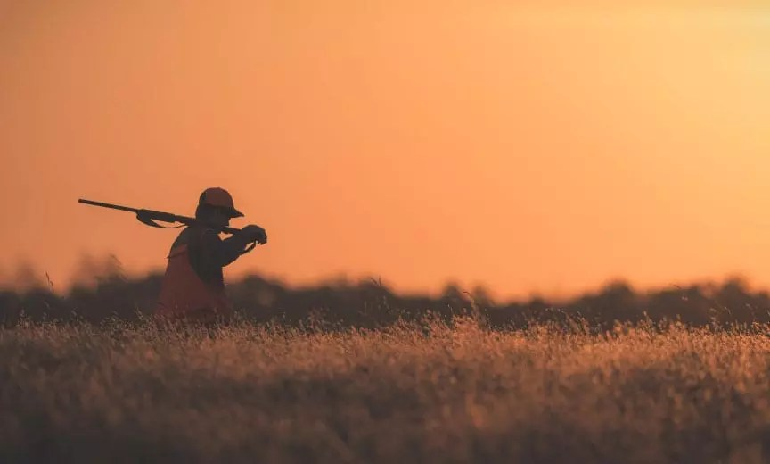 a hunter walking in a field while hunting grouse in Minnesota