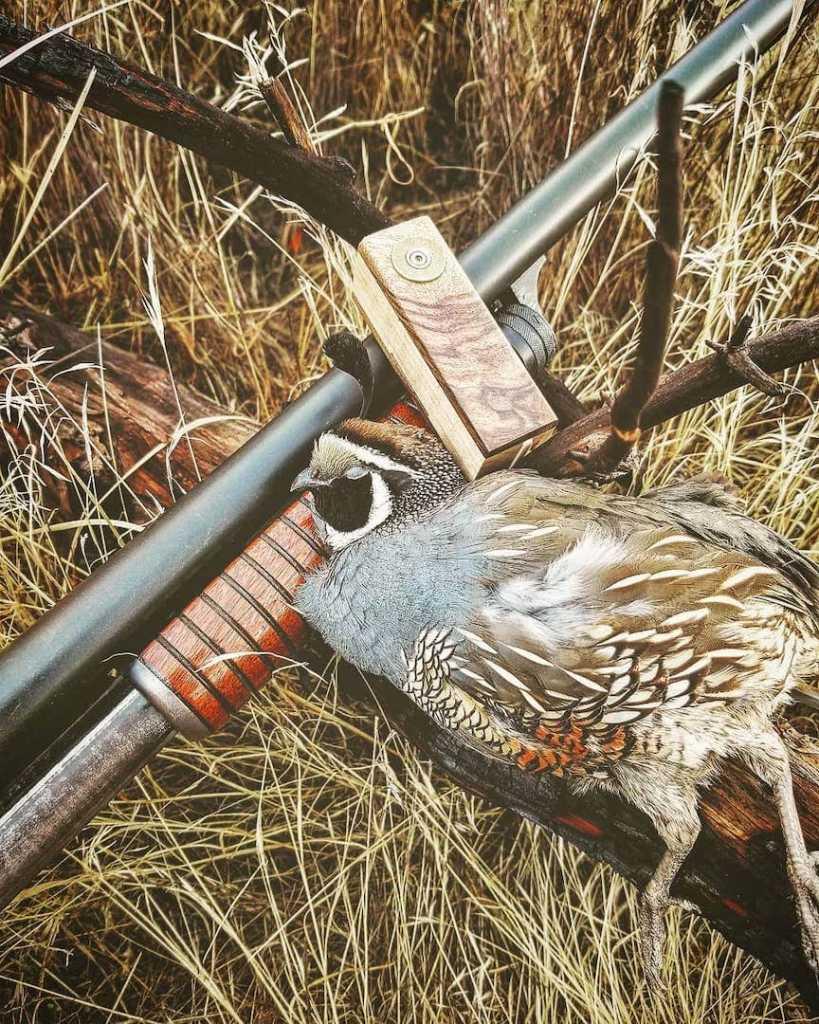 A California quail with a shotgun and a wooden quail call