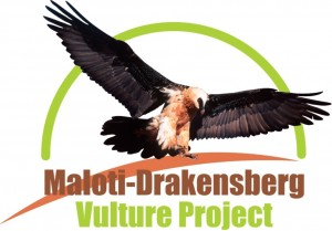 Logo for Maloti-Drakensberg Vulture Project