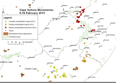 2015-02-08-16-south-africa-cape-vulture-satellite-tracking-map