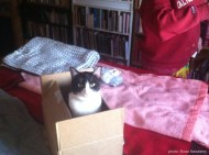 Cat in box on bed.