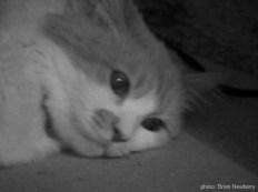 gato face bw