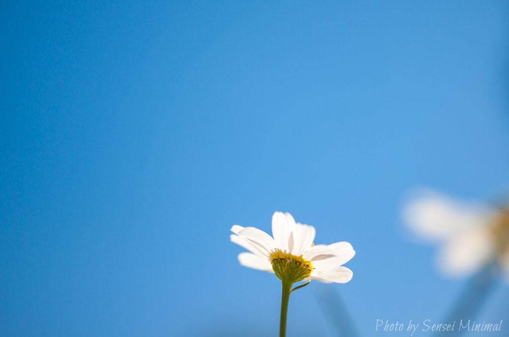 la-banalite-une-fleur