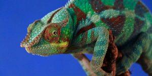 La technique du caméléon – Adaptable jusqu'à disparaître