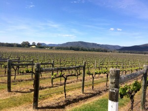 Australie - Hunter Valley - 016
