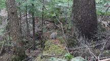 Ecureuil dans le parc de la Gaspésie