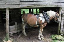 Attelage du cheval avec le wagon en bois