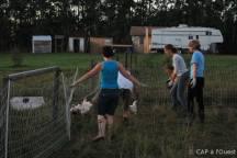Piège en arc de cercle pour attraper les poulets