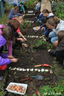 plantation des bulbes