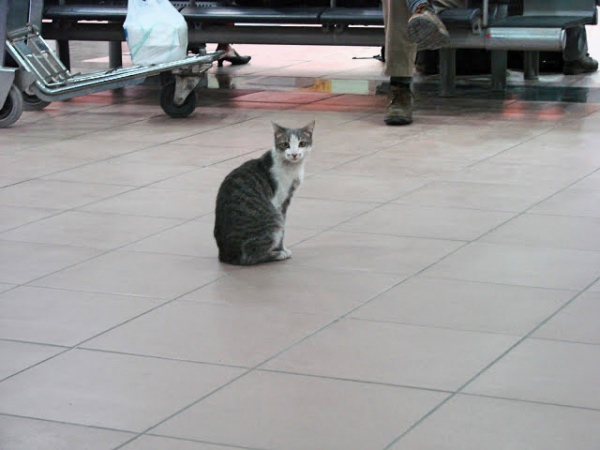 Menara Airport - Marrakech - Marrocos