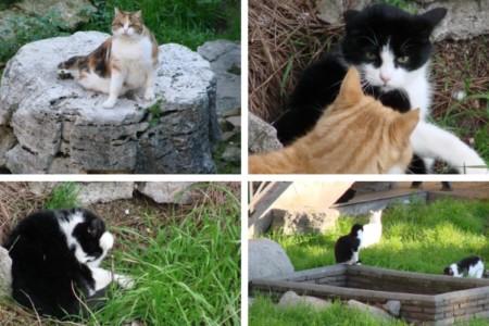 Gatos pelo mundo
