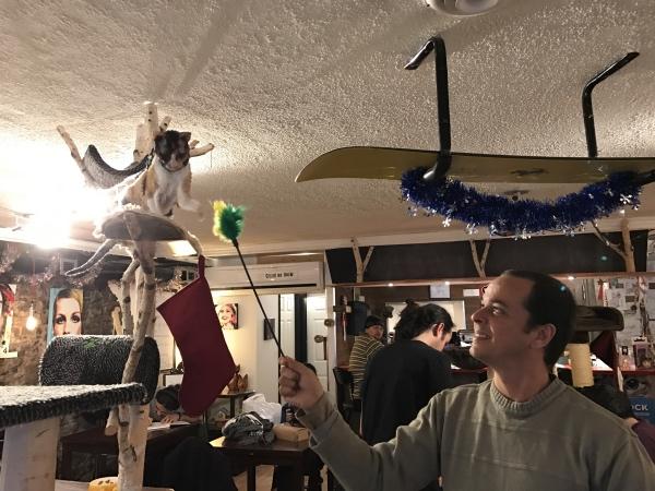 Brincando com a gata no Cat Café em Quebec