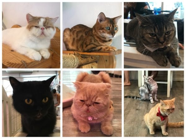 Gatos do Cat Cafe em Bangkok