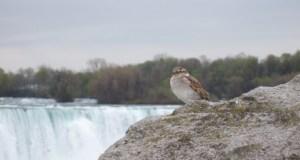 Toronto a Niagara Falls