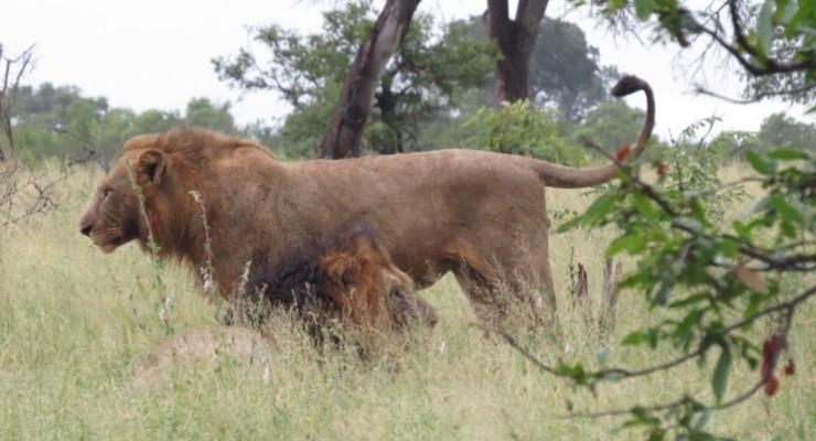Kruger Park: como é fazer o safari por contra própria no carro alugado