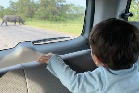 Como é fazer safari com bebê no Kruger Park