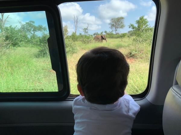 safari com bebê no Kruger Park