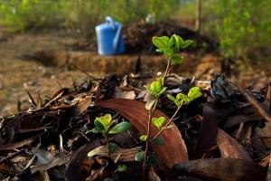 ViraVolta, Volta ao Mundo, Viagem pelo Mundo, Viagem Longo Prazo, Aprenda sobre permacultura