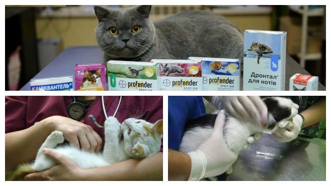 Белые червячки в кале у кошки: что делать и как поступить? У кошки в кале белые червяки Маленькие черви в кале у кошки.