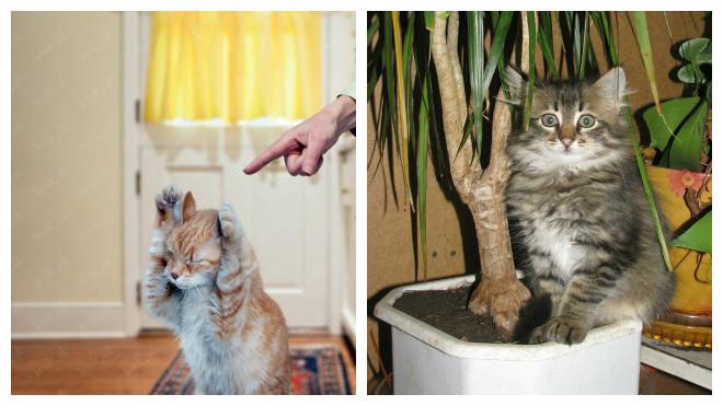 Почему кот мочится где попало. Почему взрослый кот начал писать где попало? Почему кот начал писать где попало