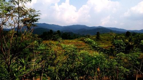 View di saung Sego Pecel Waras Farm Bulakan - Cilegon