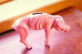 porco magro