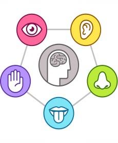 The Five Senses Enhance Customer Experience - Prolitec