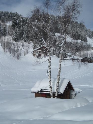 Snow and tree
