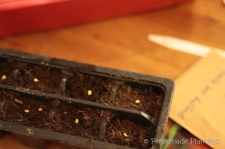 Sowing Pepper Seeds 03_14_13