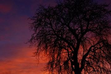 ©P.Romero: Winter Sunrise, Hampshire, UK (2013)