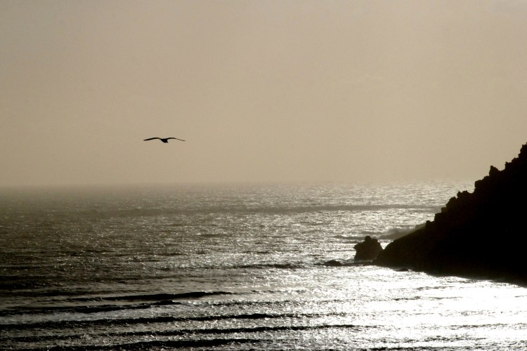 ©P.Romero: Plymouth, Devon. UK (2013)