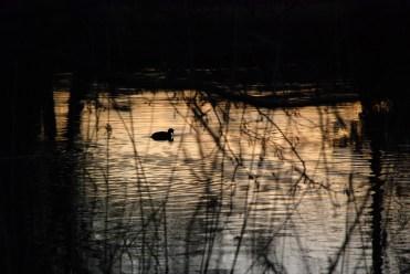 ©P.Romero: Sunset in Devon (2013)