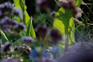 ©P.Romero: Meadow, Winchester, UK (2014)