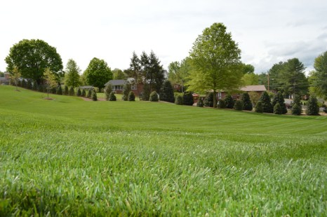 Manicured Lawn