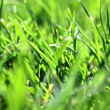 control crabgrass