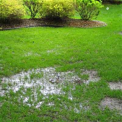 Yard Drainage Problems