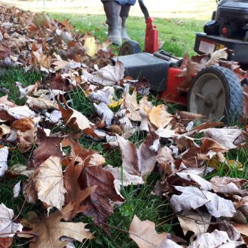 fall mow