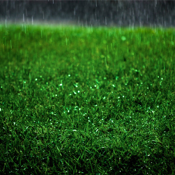 reasons not to mow grass right after it rains