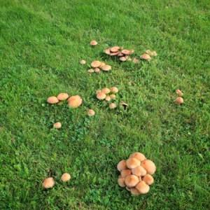 prevent lawn fungus