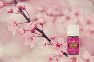 Young Living Acceptance essential oil bottle in front of a cherry blossom branch. Promise Life Blog