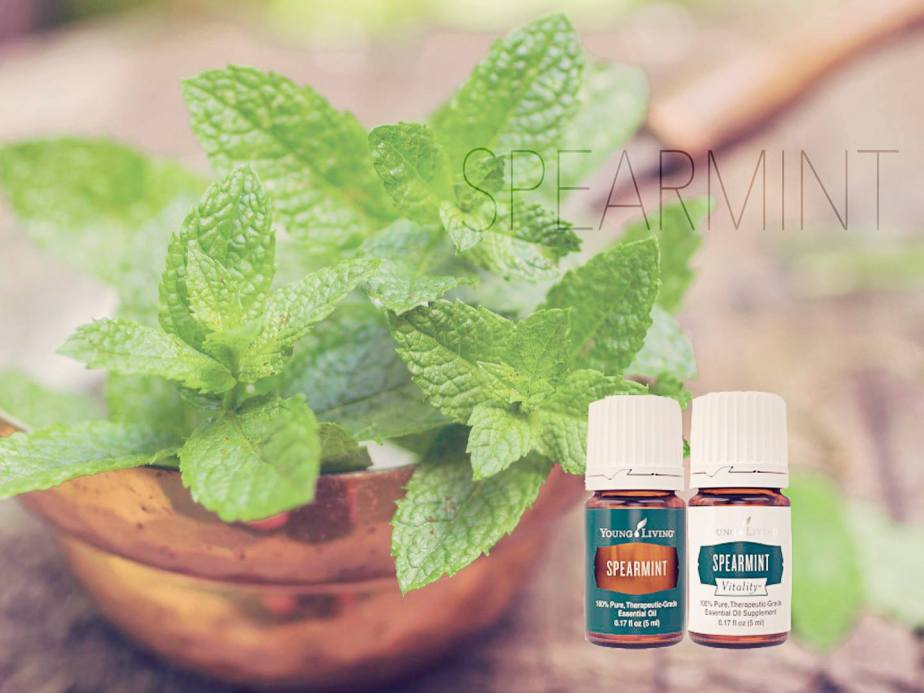 Spearmint & Spearmint vitality essential oil Young Living