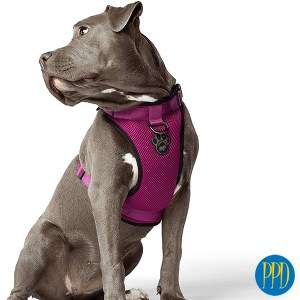 Custom dog safety harness.Custom dog harness. The perfect safety harness for pets. Customized logo or private label available.Promotional Product Direct.com