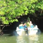 sri lanka tour itinerary - Madu River Boat Ride through Mangroves - View 18