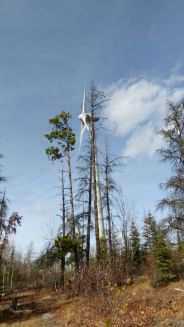 Turbine that generates electricity - right at home amongst the trees - Bear Mountain Wind Park, Dawson Creek, B.C. (Photo © 2016 by V. Nesdoly)