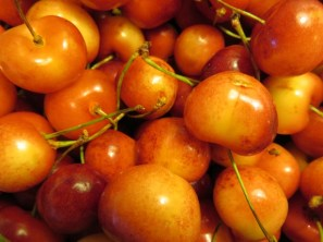 Ranier cherries are just the right combination of sweet and tart. Delicious! (Photo © 2016 by V. Nesdoly)